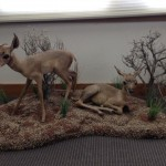 Antelope Fawns (Museum)