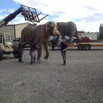 Moving a lifesize Elephant