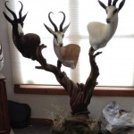Triple Springbok Pedestal