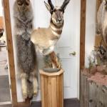 Antelope Pedestal