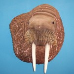 Walrus Reproduction
