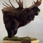 Moose Pedestal