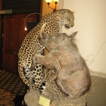 Leopard and Warthog