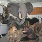 African Big 5