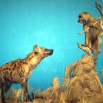 Hyena and Baboon